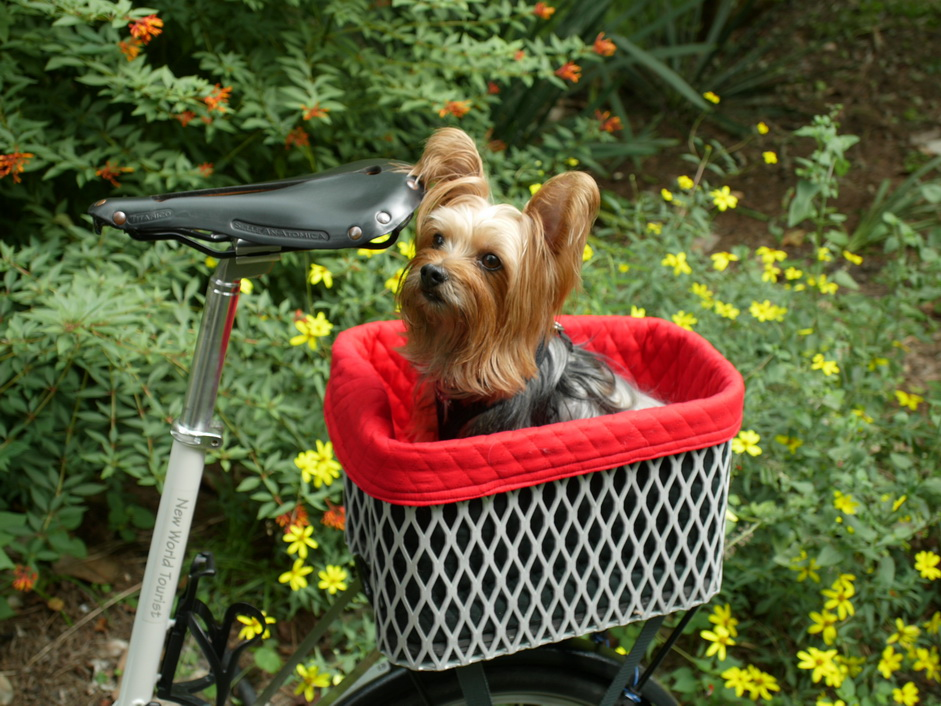 Cooper in his basket